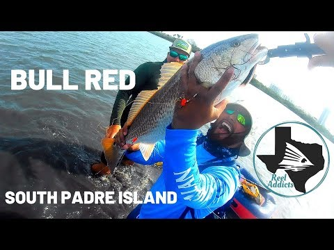 Wade Fishing For Bull Reds In South Padre Island