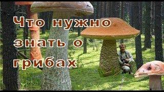Что нужно знать о грибах