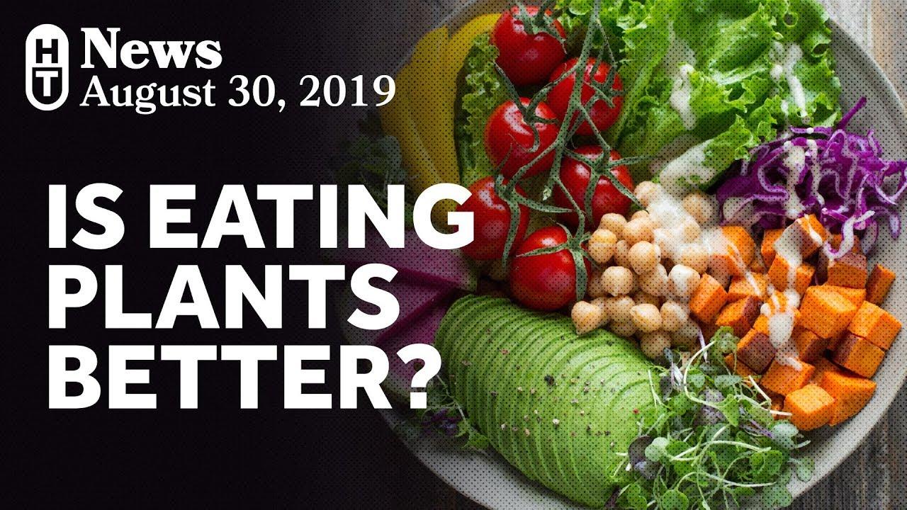 plant based diet you tube