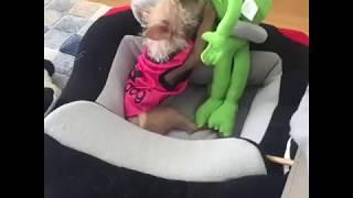 Mercedes Benz Inspired Race Car Dog Beds