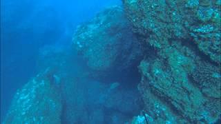突いた直後 右側の珊瑚に当たり ラインブレイクしてしまいました。 (撮影:Ken)