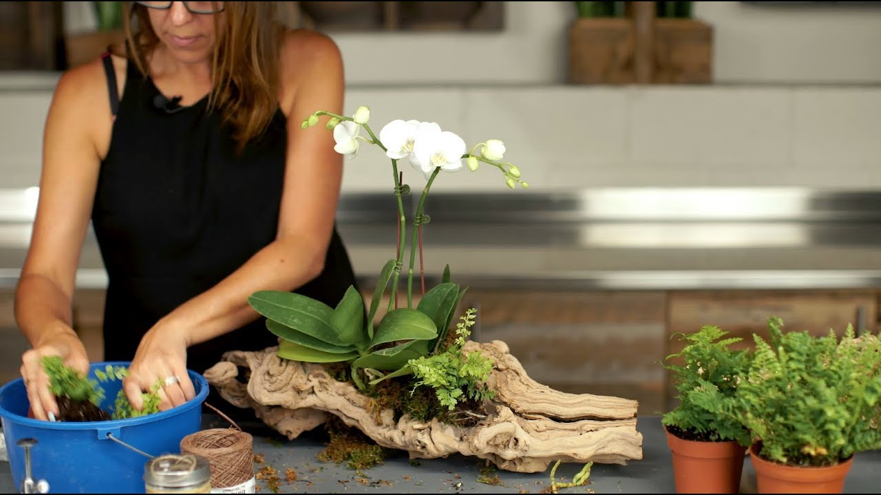 How To Make An Orchid Arrangement On Grapevine Wood Youtube