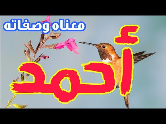 معنى اسم أحمد وصفات من يحمل هذا الاسم Youtube