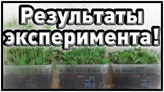 ♣ Результаты освещения растений красными и синими светодиодами ♣(, 2015-03-12T14:25:58.000Z)