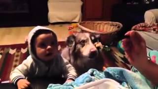Кто умнее ребенок или собака/Someone smarter than a child or a dog