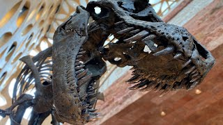 A full size 3D printed replica of a Tyrannosaurus rex
