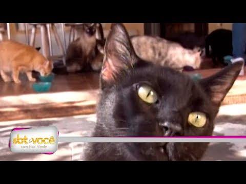 Paixão por gatos: conheça a história da dona Eva Aparecida que cuida de 30 gatos
