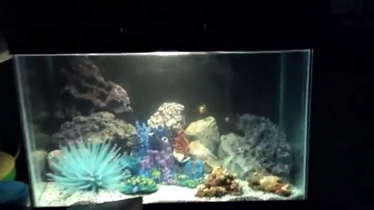 5 gallon fish tank youtube some live plants for the 5 for 5 5 gallon fish tank