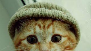 Смешные КОШКИ и ПРИКОЛЫ с кошками. Кошки дерутся, боятся, мяукают, пугаются, играют, бесятся и спят