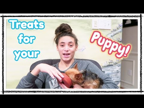 Treats for your Puppy! | Bullymake Subscription Box | In Mad's World