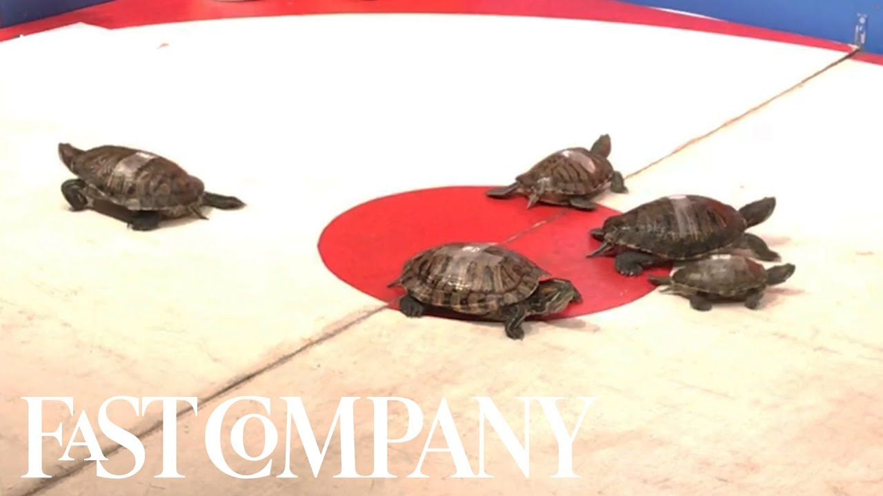 This Bar Has Beers And Turtle Racing | You Have to See This