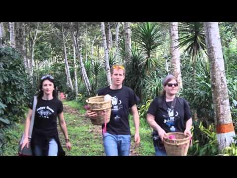 Umami Kaffee Camp HONDURAS 2016 - coffee picking
