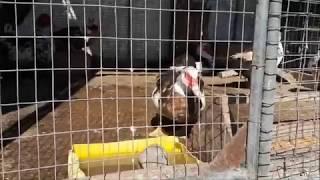 Зоопарк на территории Храмового комплекса в Ессентуках / Видео