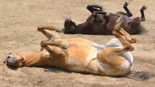 滑稽的马 - 一个有趣的马的视频。汇编