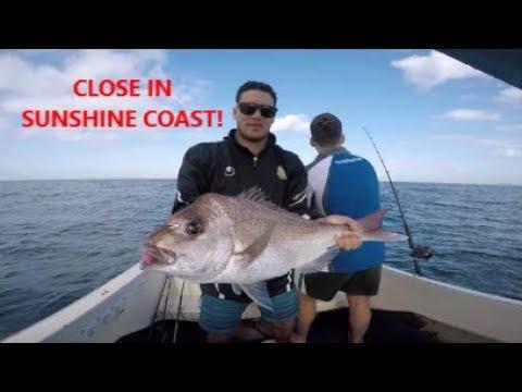 BIG Snapper, BIG Tuskies, BIG Squid In Close - Sunshine Coast