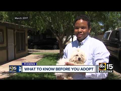 Buyer beware: What to know before adopting from any rescue