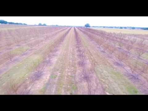 Segovia Produce, Ltd. - Texas Farm Patch