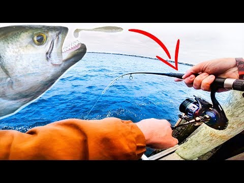FISHING Inshore DOCKS For Predator BLUE FISH!