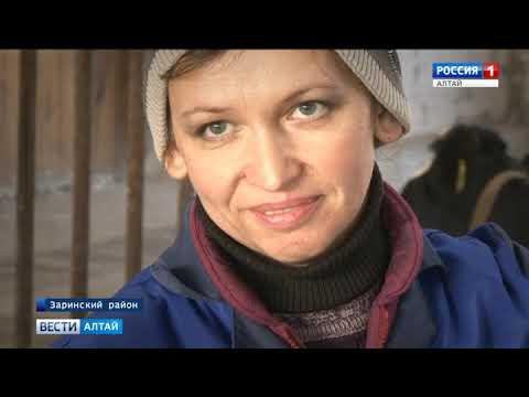В хозяйстве «Алтай» Заринского района установили рекорд края по надоям молока