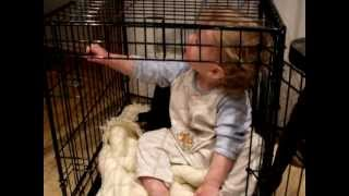 Cage Training Toddler Josh And Molly The Patterdale Puppy.avi