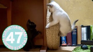 子猫がハマった面白い遊び