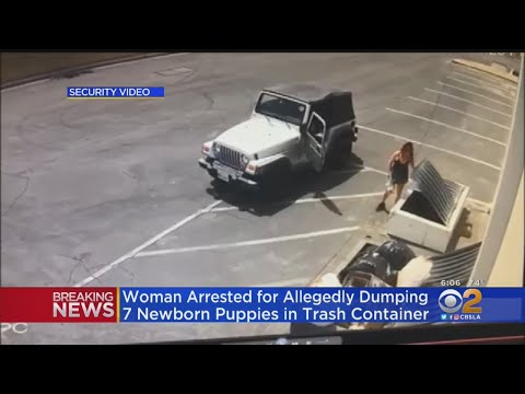 J. Cortez - Coachella Woman Arrested For Dumping New Born Puppies In Garbage