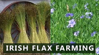 Irish Flax Farming