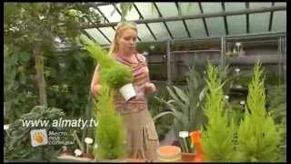 видео Орхидеи. Основные принципы правильного ухода