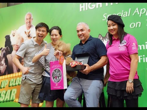High Five Dog Talent Competition @i12 Katong Singapore with Cesar Milan