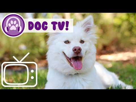 Chill Your Dog TV! Hours of Videos to Relax and Entertain Your Dog!