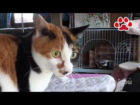 三毛猫が怖がった物とは【瀬戸の三毛猫日記】Things cats got scared by