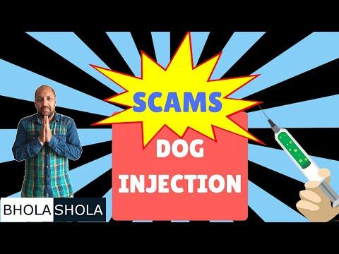 Pet Care - Dog Injection Scams - Bhola Shola