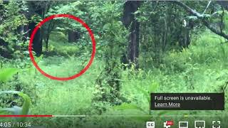 Bigfoot GA - New Field Findings and Comments on Fantastic Daily