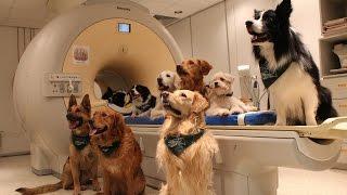How Dogs Interpret Our Praise