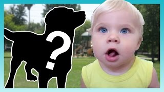 THE NEW DOG! | Look Who's Vlogging: Daily Bumps
