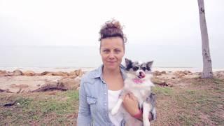 Ожирение у собак: опасности лишнего веса | Часть 2 | Догмама