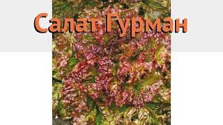 Салат обыкновенный Гурман Листовой (gurman) 🌿 обзор: как сажать, семена салата Гурман Листовой