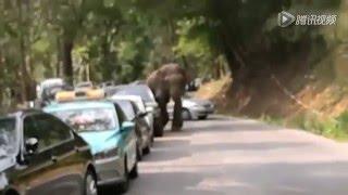 Wild elephant left the Wild Elephant Valley in SW China