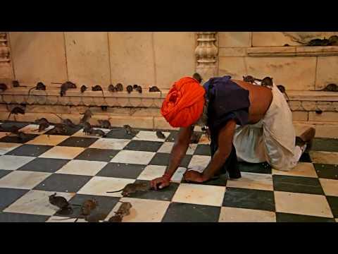 Karni Mata Temple Deshnok, Rajasthan