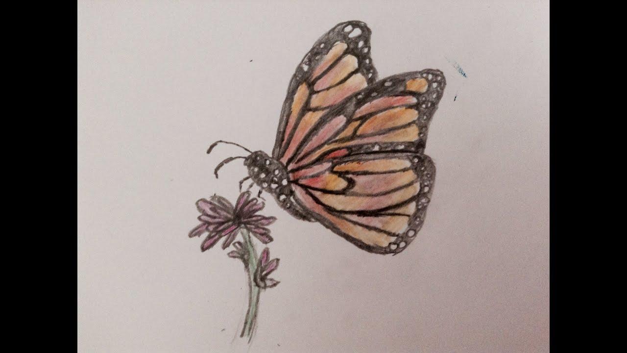 Speed Drawing Papillon De Profil Youtube