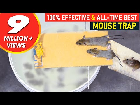 All time Best Mouse Trap | Trap Rat Trap Homemade | Bucket Mouse Trap