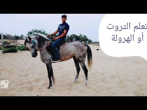 تعيلم ركوب الخيل أسماء مشي الخيل وكيف تساير حركة الحصان في ركوب الخيل Youtube