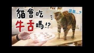 【黃阿瑪的後宮生活】貓會吃牛舌嗎!?