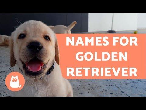 Names For Golden Retriever Dogs
