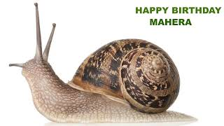 Mahera   Animals & Animales - Happy Birthday