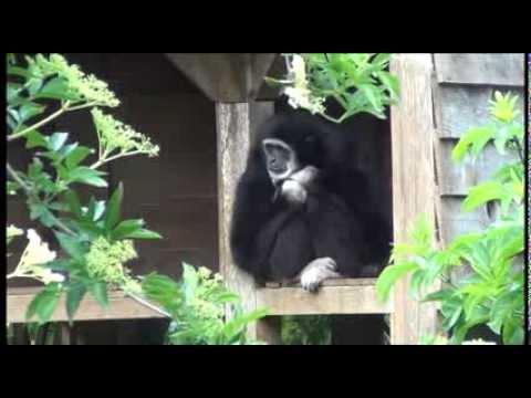 Bioparc Zoo de Doué la Fontaine