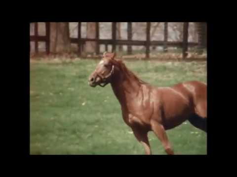 Secretariat Tribute - R.I.P Big Red