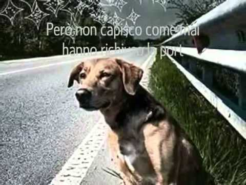 Video Commevente Contro L Abbandono Dei Cani YouTube