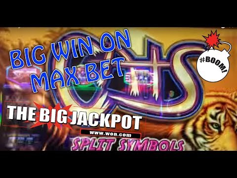 Cats - Big Win - Max Bet Slot Machine Bonus - 동영상