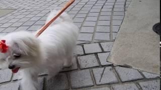 お散歩大好き♡ キャピキャピしながら歩きます(*''ω''*) HPはこちらhtt...